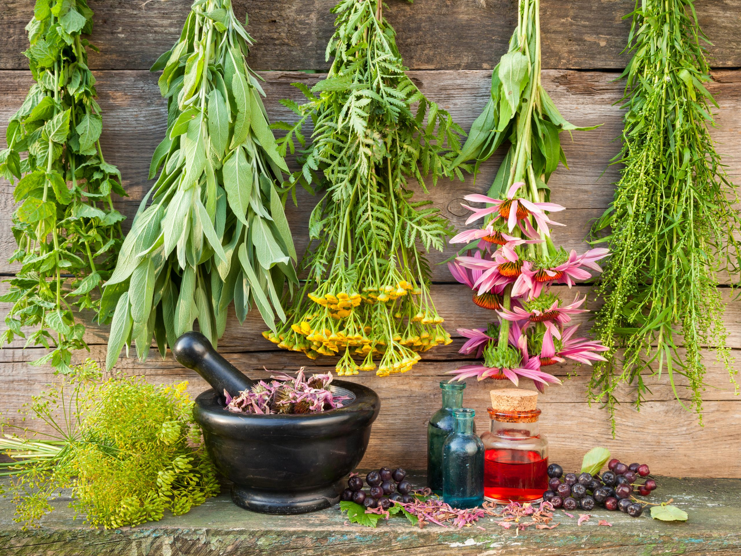 Herbal Study