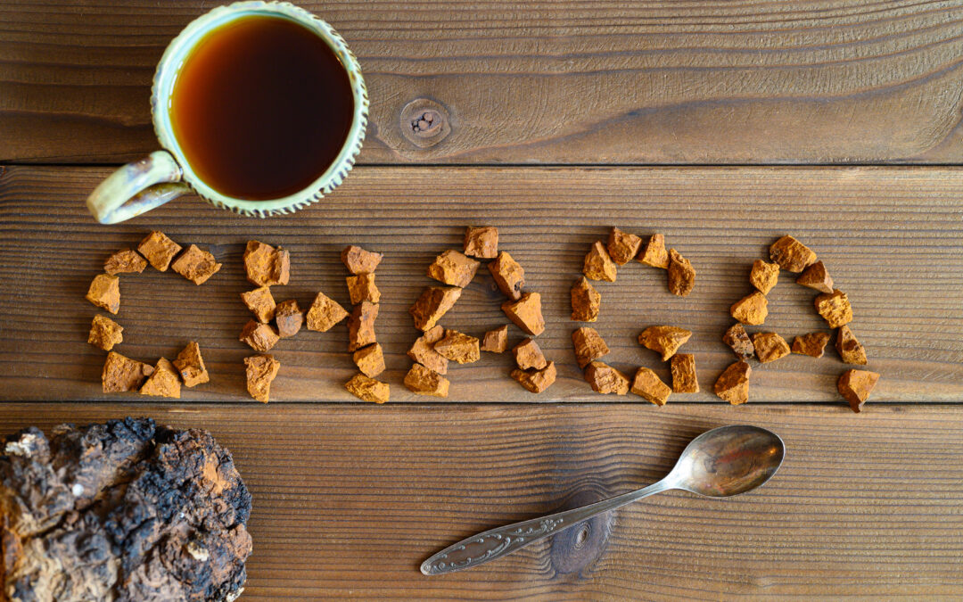 Adaptogens, Part III: Chaga